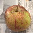 Every year as autumn sets in I feel the need to find out where our localApple Day celebrations will be.Celebrated on and around 21st October each year this is a […]